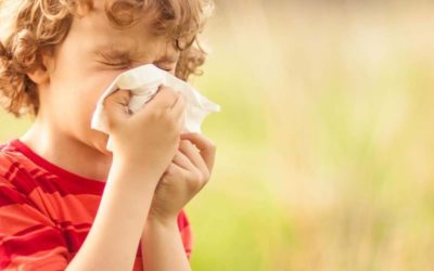 Hayfever – don't suffer anymore!